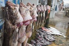 Fermo di pesce del lupo del giorno fotografie stock