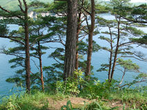 Fernöstliche Seekonserve 2 Stockbild