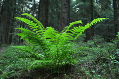 Free Fern Royalty Free Stock Photography - 10168597