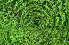 Fern. Looking down at a treefern stock photography