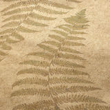 Fern. Vintage wallpaper background with fern Royalty Free Stock Images
