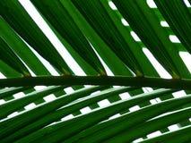 fern fotografia royalty free