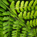 Fern. An abstract shot of a fern leaf royalty free stock photo