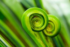 Fern. The green fern origin to in the nature Stock Image