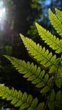 fern Royaltyfria Bilder