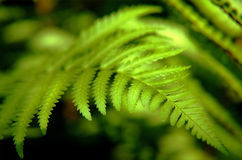 Free Fern Stock Images - 7744374