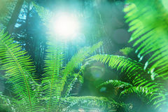 fern immagine stock libera da diritti
