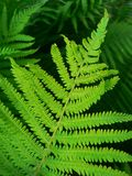 fern Fotos de Stock
