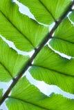 Fern. Closeup of a Green Fern Stock Image