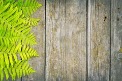 Free Fern Stock Images - 97373134