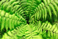 Fern from above royalty free stock photo