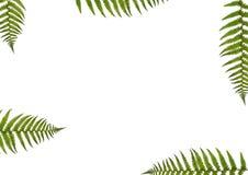 fern abstrakcyjna ilustracja wektor