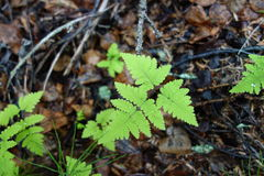 A fern in alaska Stock Image