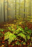Fern in autumn forest Royalty Free Stock Images