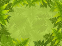 Fern background Stock Image
