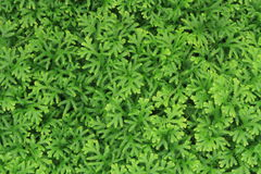 Green Fern wall background Stock Image