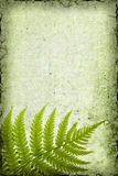 Fern Background. Grungy fern background with room for text Royalty Free Stock Image