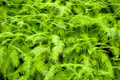 Fern background stock images