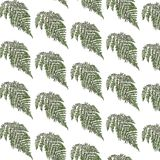 Fern background Royalty Free Stock Photos