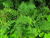 Fern background photo. Green plant texture stock photo