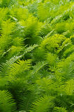 Fern background Stock Photos