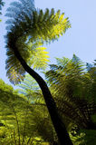 Fern in backlight Stock Images