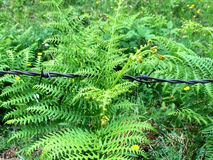 Fern behind barbed wire Stock Images