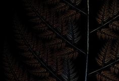 Fern on the black background. Illustration of autumn fern on the black background Stock Image