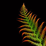 Fern on black background Royalty Free Stock Image