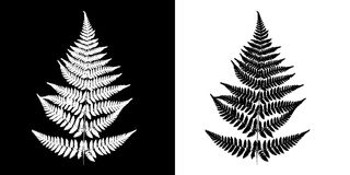 Fern Black-and-white vector image. Black fern silhouette isolate. D on white background and White fern silhouette isolated on black background Royalty Free Stock Photography