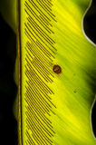 Fern blade with many spore lines. Royalty Free Stock Photography