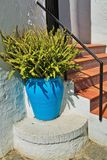 Fern in a blue pot near the stairs. To the entrance to the house Stock Image