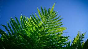 Fern on the blue sky stock images