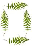 Fern Border Royalty Free Stock Photography