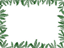 Fern Border. A white background with a border of fern leaves stock illustration