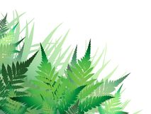 Fern Border Royalty Free Stock Image