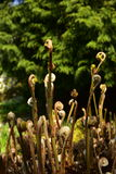 Fern Botanic Garden Image stock