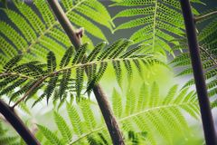 Fern, Brake, Plant, Green, Forest Royalty Free Stock Image