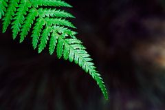 Fern, Brake, Plant, Green, Leaf Royalty Free Stock Image