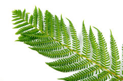 Fern Branch Stock Photos
