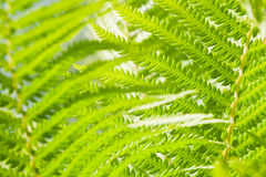 Fern branch background Stock Photos