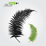 Fern. Branch black silhouette nature set illustration Royalty Free Stock Image