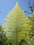 Fern branch in a blue sky Stock Images