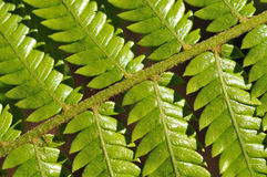 Fern branch Stock Images