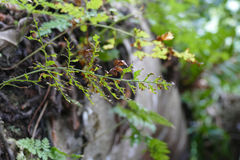 Fern, branch and plant growing on trunk Stock Image