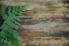 Fern branch on weathered wooden tree trunk background Stock Images
