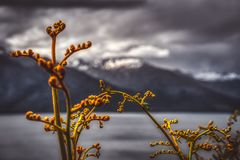 Fern branches in close-up with lake and mountains