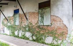 Fern on brick wall Royalty Free Stock Photography