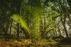 Fern Bush im Wald lizenzfreie stockbilder