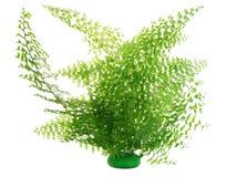 Fern bush isolated royalty free stock images